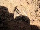 Раскопки в г. Йошкар-Оле на кладбище при Входо-Иерусалимской церкви 2010 г._50