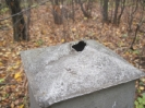 Семеновское (старое) кладбище_130