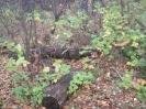 Семеновское (старое) кладбище_175